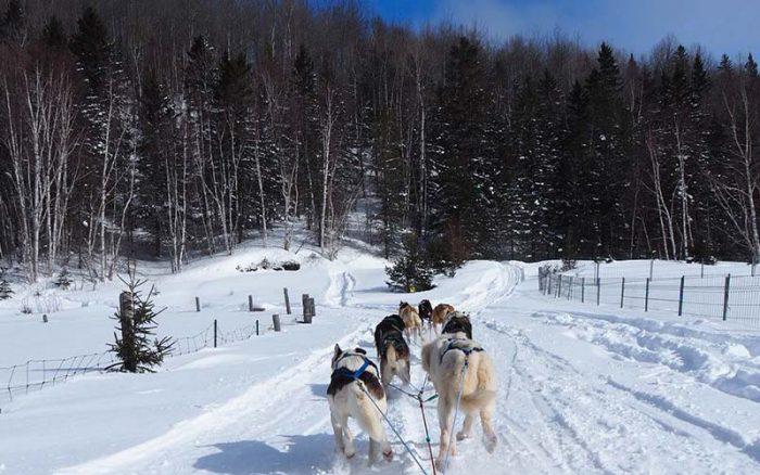 Activités hivernales traîneau à chien à l'Auberge du Vieux-Moulin Lanaudière